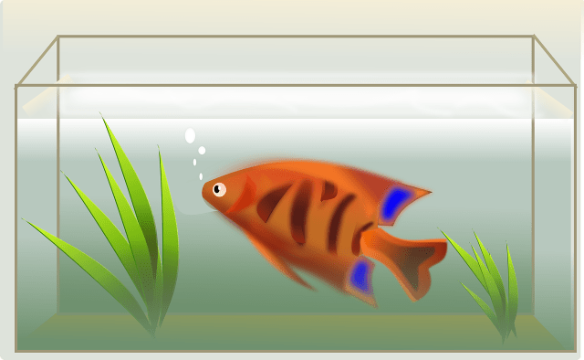 Can I Use A Canister Filter For A Saltwater Tank