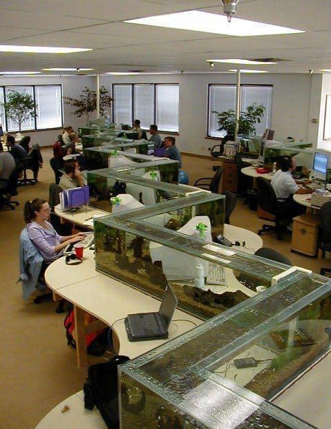 Aquarium Desk Divider in an office