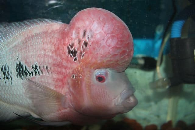 Fish Head Song