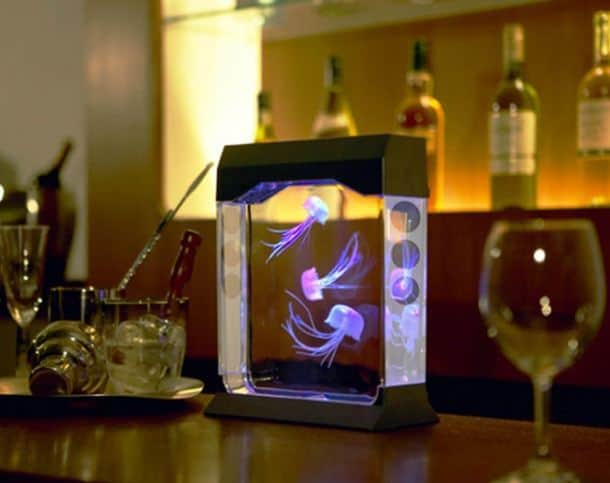 Modern jellyfish tank