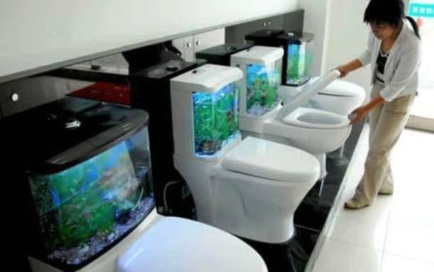 Toilet Tank Aquarium