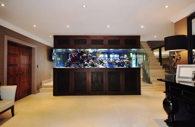 9 celebrities with fish tanks 8 is awesome for Fish tank built into wall