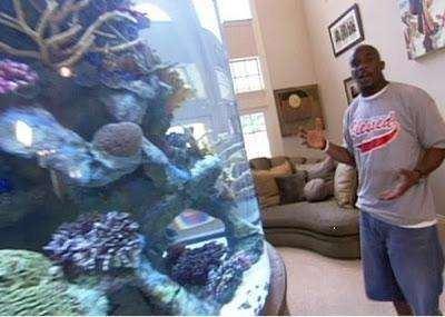 Impressive Fish Tank by Roy Williams