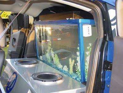 Fish Tank In The Trunk