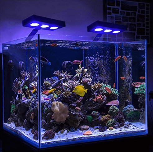 How To Make Your Own Reef Light Kit