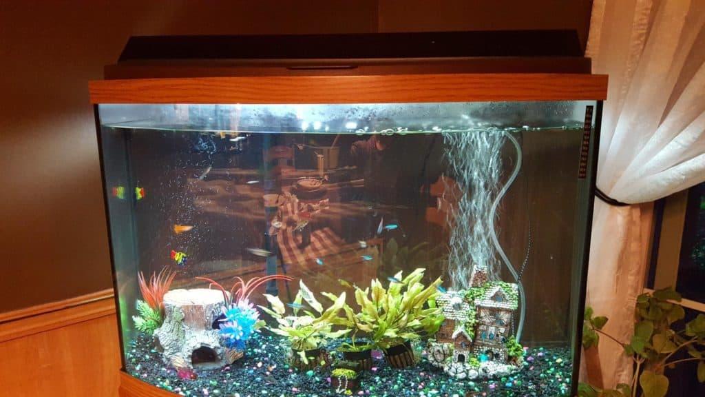 All Glass Aquarium Fluorescent Strip Light Installed in an aquarium
