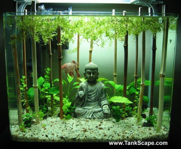 This serene tank creatively uses pieces of bamboo with live plants at the top to create the effect of an underwater bamboo forest,A meditating Buddha tank decoration right in the center