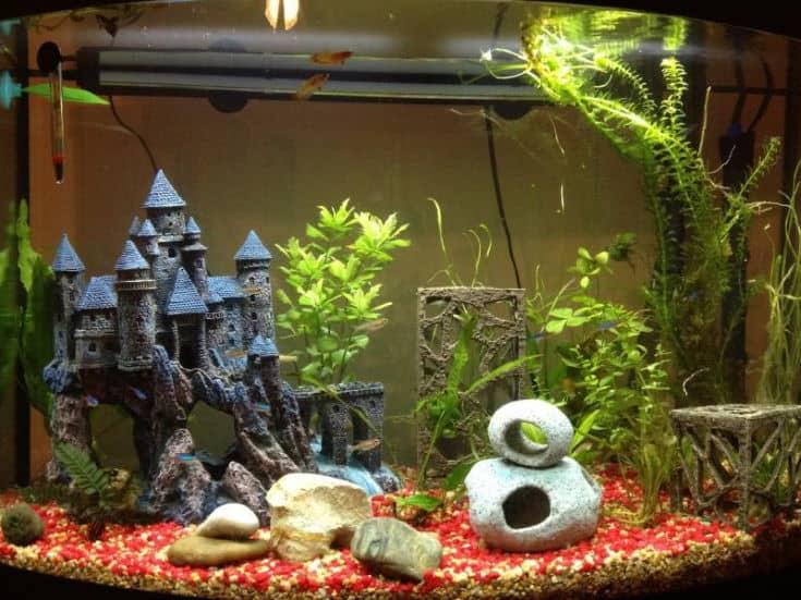 Majestic Betta Fish Aquarium