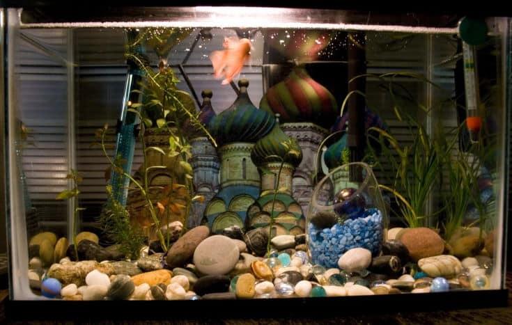 Agrabah fish tank