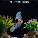 17 Betta Fish Toys and Decor To Prevent Boredom - pin
