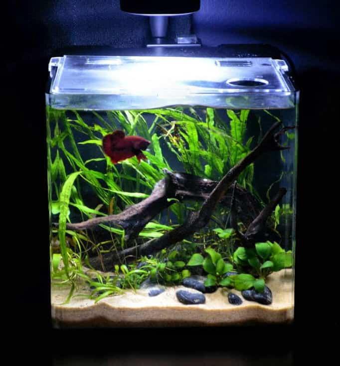 Natural and Simple fish tank