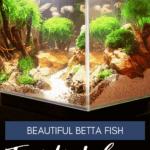 Beautiful Betta Fish Tank Ideas - pin