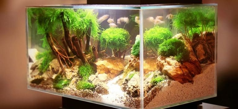 Aquarium with plants and substrate