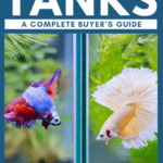 Best Betta Tanks—A Complete Buyer's Guide - Pin