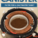 Can I Use A Canister Filter For A Saltwater Tank?- pin