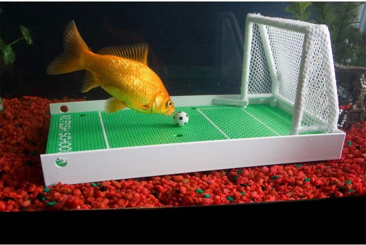 R2 Fish School Complete Fish Training Kit