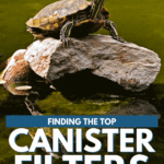 Best Canister Filter For Turtle Tanks - 2021 Reviews - pin