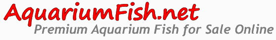 Aquariumfish.net logo