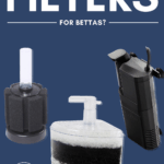 What Are the Best Filters for Bettas? - Pin