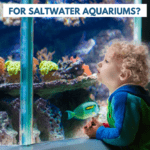 What is the Best Light for Saltwater Aquariums? - Pin