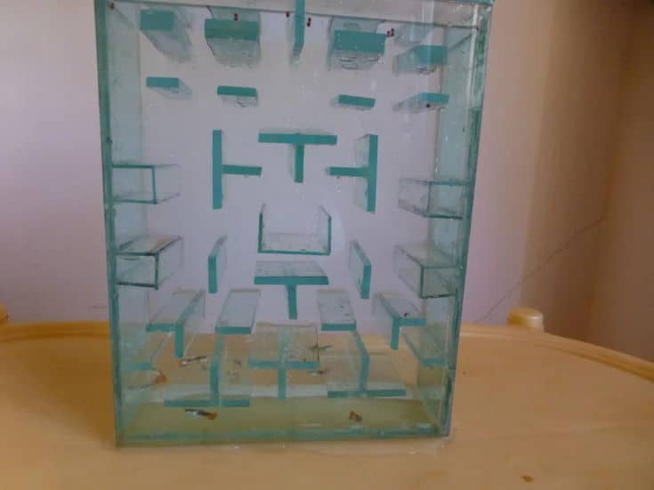 Pac Man Fish Tank on the table