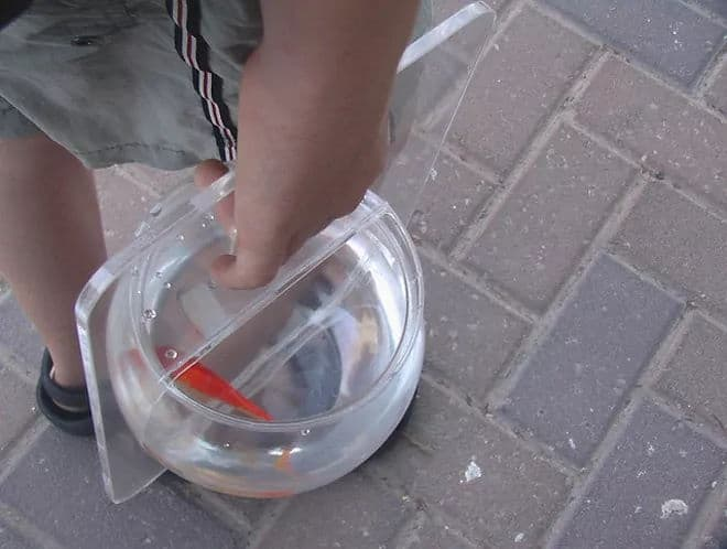 man carrying Portable Aquarium Fish Bowl