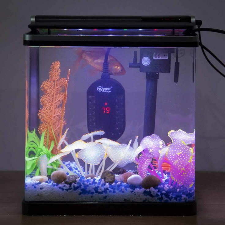 Hygger Mini Submersible Aquarium Heater inside aquarium.