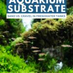 Beginner's Guide to Aquarium Substrate—Sand vs Gravel in Freshwater Tanks