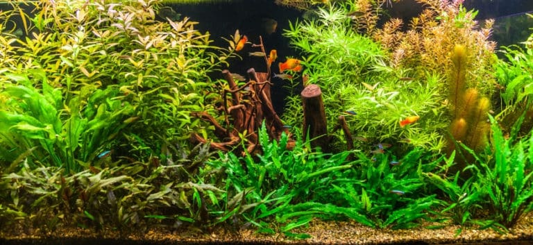 Fish tank and live plants