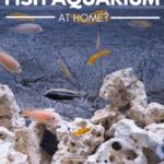 Benefits of Keeping a Fish Aquarium At Home - Pin