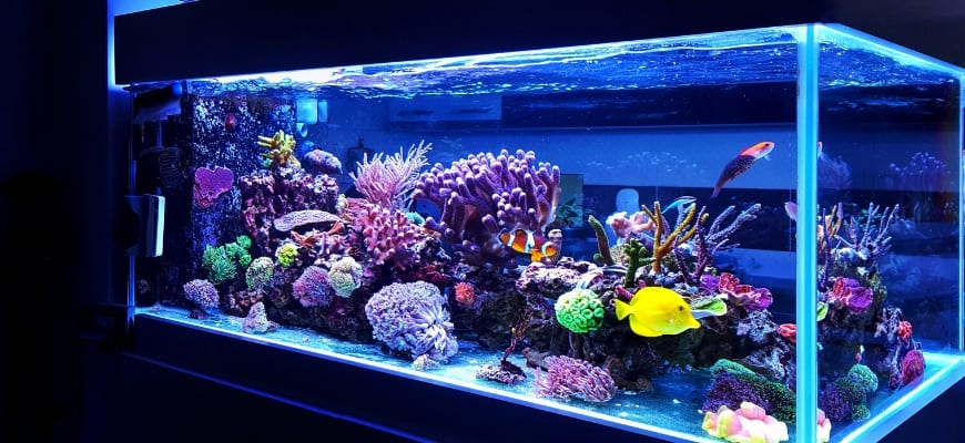 Benefits of Keeping a Fish Aquarium At Home - Beautiful aquarium in a dark background.