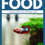 Best Betta Food - Guide For The Optimal Diet - Pin