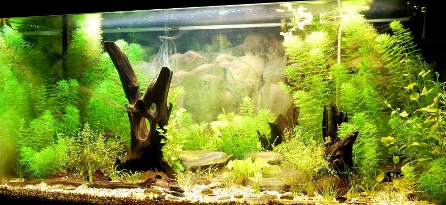 Well-lighted aquarium.