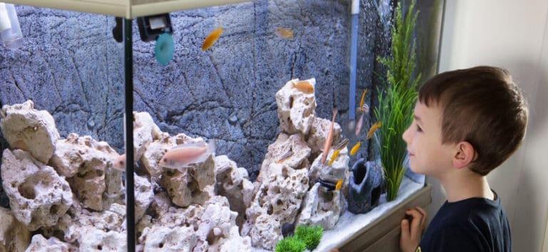 Close up shot of a boy looking on fishes at aquarium.