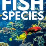 Brilliant, Beautiful Aquarium Fish Species - Pin