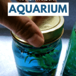 Can't Have Real Fish_ Make a Fake Jar Aquarium - Pin