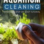 DIY Aquarium Cleaning—Step-by-Step Tutorial