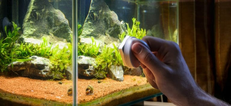 Close up shot of aquarium with hand holding a cleaner.
