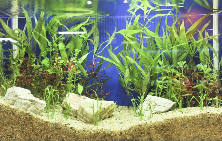 Aquarium decoration in beautiful background