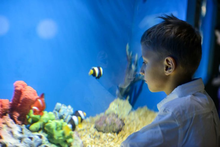 serious boy looking in aquarium with tropical fish.