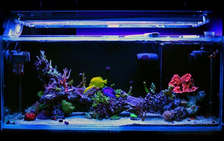 Coral Saltwater reef aquarium tank