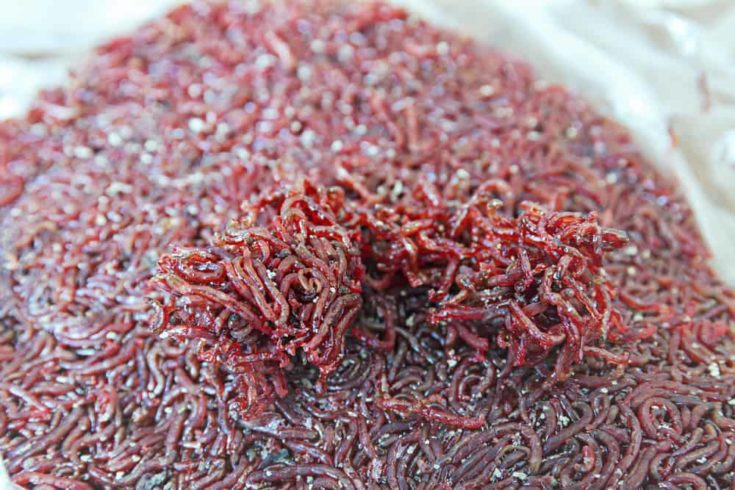 Frozen bloodworm for feeding aquarium fish and crabs.