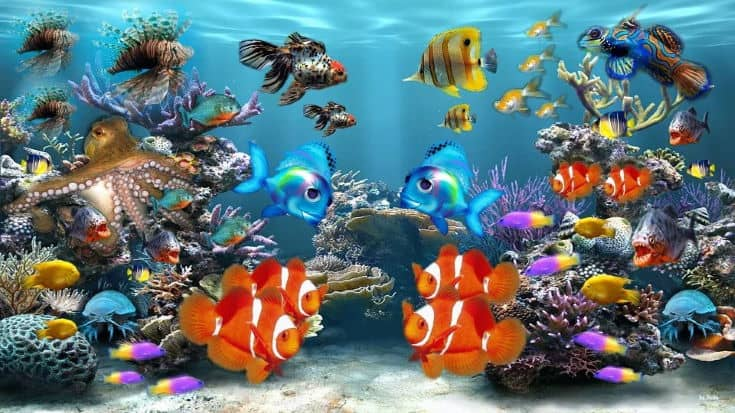 fishes inside the tank