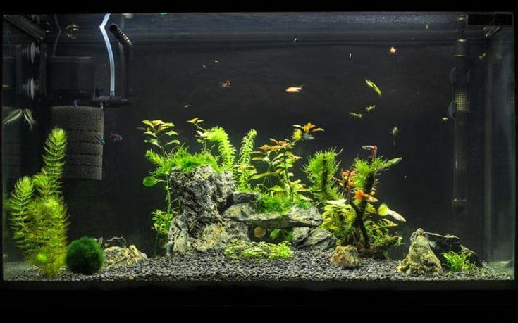 10-Gallon Natural Aquascape