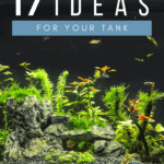 17 Aquascape Ideas for Your Tank - Pin