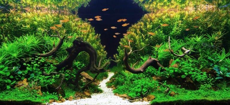 Aquarium with beautiful aquascaping design.