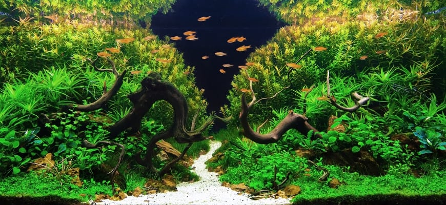 17 Aquascape Ideas for Your Tank - Aquarium with beautiful aquascaping design.