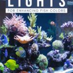 Best Aquarium Lights for Enhancing Fish Colors - pin