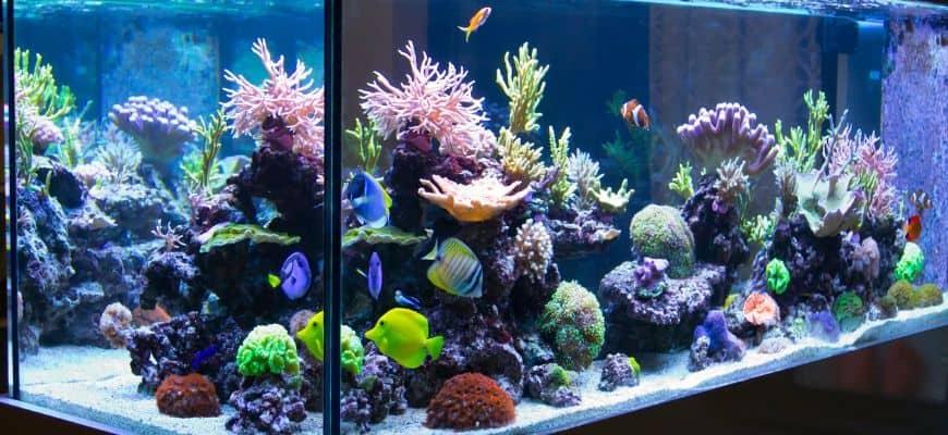 Aquarium with lights and beautiful aquascape