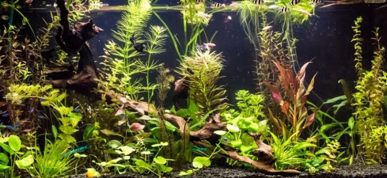 Aquarium with different kinds of plants inside